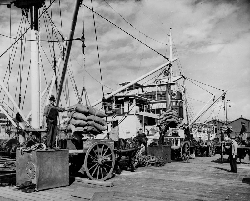 Discharging raw sugar from SS Fiona IV at the CSR wharf, mid 1930s