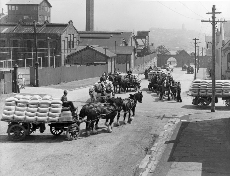 After passing through the archways of the main gate of the Refinery, horse teams haul wagons loaded with refined sugar products along Jones Street and into John Street, circa 1920s